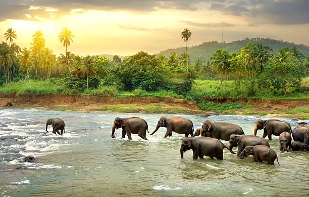 Waarom ik voor groepsreis naar SRI Lanka gekozen heb
